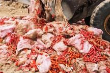 فرآوردههای گوشتی دهکده پروتئین توقیف شد