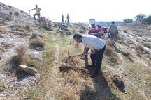 احیای ۵۰۰ هکتار جنگل و مرتع در باشت آغاز شد