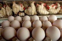 صادرات تخم مرغ خوراکی از استان مرکزی ۱۰۰ درصد افزایش یافت