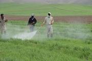 محلول پاشی تغذیه ای مزارع گندم و جو کردستان آغاز شد