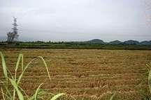 کاه و کلش؛ سرمایه زمین و زراعت دوم است