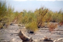 پروژه مدیریت جامع مبارزه با آفات و بیماری های گیاهی در البرز آغازشد