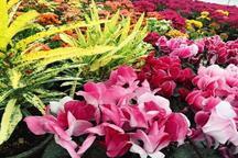 424 میلیون انواع گل و گیاهان زینتی در محلات تولید شد