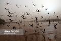 خوزستان تا آخر هفته، خاک و تندباد