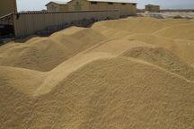 ۵۵۰ تن غلات احتکار شده در لارستان کشف شد