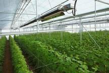 نظام مهندسی کشاورزی قزوین از توسعه گلخانه ها حمایت می کند