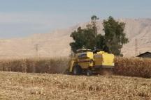 کشاورزان کهگیلویه وبویراحمد از خرید تضمینی ذرت استقبال نکردند