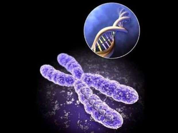 شورای توسعه سلولهای بنیادی در لرستان تشکیل می شود