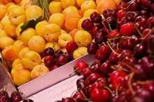 برداشت 41 هزار تن میوه از باغات چهارمحال و بختیاری
