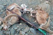 هفت شکارچی کل وحشی در لرستان دستگیر شدند