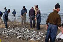 سرانه مصرف ماهی در آذربایجان غربی به ۶.۶۲کیلوگرم درسال رسید