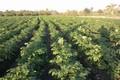 تولیدات کشاورزی قم دو صدم درصد بالاتر از میانگین کشوری است