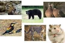 سیستان و بلوچستان دارای تنوع زیستی با غنای گونه ای پایین است