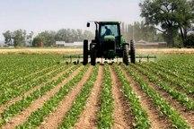 خام فروشی برای کشاورزان سمنان به صرفه نیست