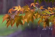 478.5 میلیمتر باران در باشت بارید