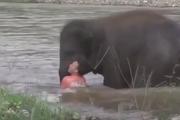 تلاش یک فیل برای نجات جان یک انسان
