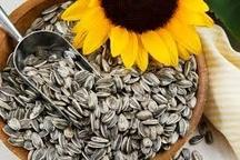 خرید تضمینی حدود 70 تن دانه روغنی آفتابگردان در مازندران