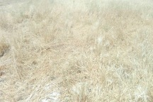 طوفان 20 میلیارد ریال به مزارع ایذه خسارت وارد کرد