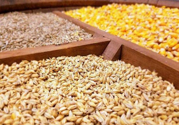 جلوگیری از توزیع ۵۱۰ تن ذرت دامی دولتی در بازار آزاد