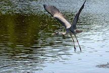 بارشهای بهاری پای پرندگان مهاجر را به تالاب آق قشلاق بجنورد باز کرد