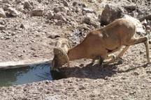 48 هزار لیتر آب به آبشخور حیات وحش کهگیلویه و بویراحمد منتقل شد