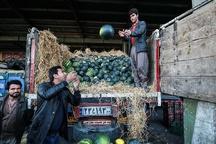 فعالیت اتباع خارجی در گروه مواد غذایی و خوراکی ها ممنوع است تصدیگری اتباع در گلخانه های یزد