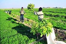 86 تعاونی روستایی در استان مرکزی ثبت شد