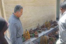 عامل فروش کبک در مشهد دستگیر شد