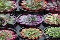 نمایشگاه گل و گیاه در یاسوج افتتاح شد