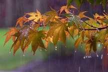 نوروزی سرد و بارانی در انتظار همدانی ها