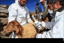واکسیناسیون ۸۶۰ هزار راس انواع دام در مقابل بیماری تب برفکی