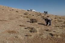 1300 هکتار از مراتع مهاباد غنی سازی شد