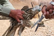 2 شکارچی متخلف به دام محیط بانان قزوین افتادند