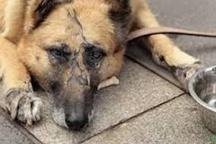 سگ آزاری در پارس آباد مغان  فردی را روانه زندان کرد