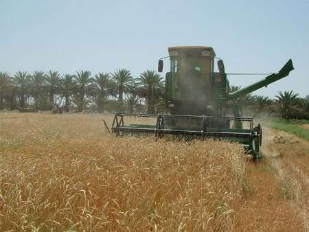 خرید گندم مازاد برمصرف کشاورزان ایرانشهر از مرز 30 هزار تن گذشت