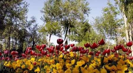 شهردار: بازارچه دائمی گل و گیاه در یاسوج آماده بهره برداری است