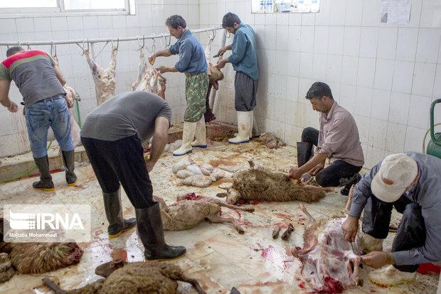 اهدای ۲۰۰ راس گوسفند توسط خیران خراسان شمالی