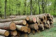 دستگیری 4 قاچاقچی الوار جنگلی در مشگین شهر