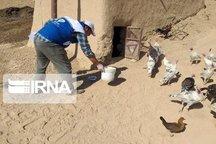 طرح واکسیناسیون طیور روستایی در کردستان آغاز شد