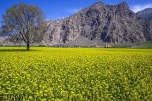 کشاورزان، کشور را از واردات روغن بی نیاز می کنند
