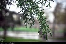 بارش ۱۵.۷ میلیمتری باران در آرادان  بارش باران تا اواخر امشب در سمنان ادامه دارد