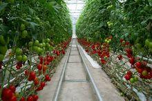 بازار فروش محصولات گلخانه ای با روشهای نوین فراهم شود