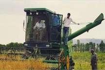برداشت دانه های روغنی کلزا در سلماس آغاز شد