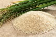 آرامش بازار برنج مازندران در فصل برداشت شالی