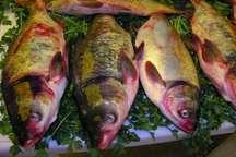 مصرف ماهی در وعده شام روزه اولی ها توصیه می شود