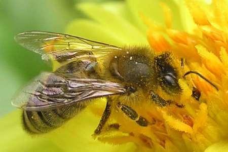 600 ملکه اصلاح شده زنبور عسل بین زنبورداران استان بوشهر توزیع شد