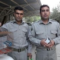 دستگیری متخلفین زنده گیری 23 قطعه سهره در خرم آباد