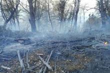 آتش در جنگل نیلکوه گالیکش خاموش شد