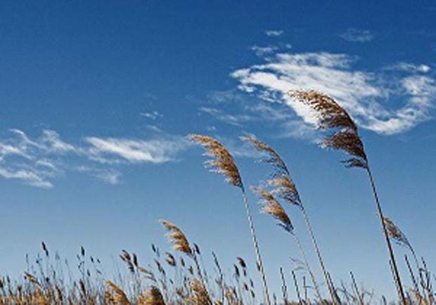 آسمان قزوین با وزش بادهای جنوبی همراه است