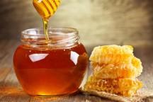 امسال 800 تن عسل در اشنویه تولید می شود